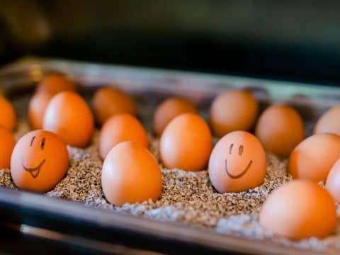 Happy Eggs Ratscher Landhaus