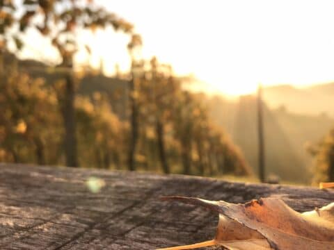 Herbst im Weinland
